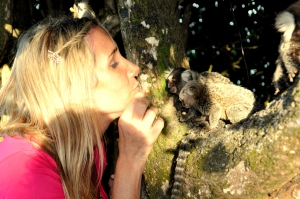 BRA ALLY KISSING MONKEYS